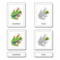 Parts Of A Frog (Amphibians)