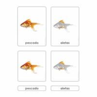 Partes Del Pescado